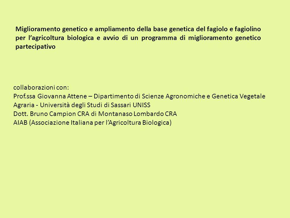 Miglioramento genetico e ampliamento della base genetica del fagiolo e fagiolino per lagricoltura biologica e avvio di un programma di miglioramento g