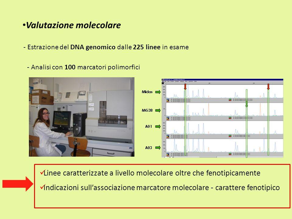 Valutazione molecolare Linee caratterizzate a livello molecolare oltre che fenotipicamente Indicazioni sullassociazione marcatore molecolare - caratte