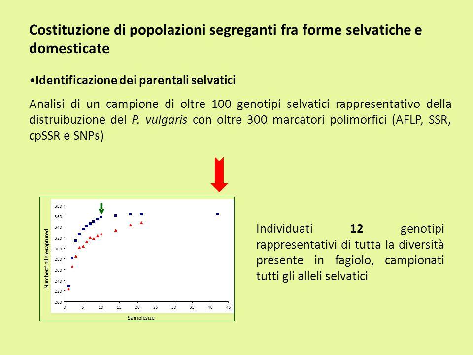 Costituzione di popolazioni segreganti fra forme selvatiche e domesticate Identificazione dei parentali selvatici Analisi di un campione di oltre 100