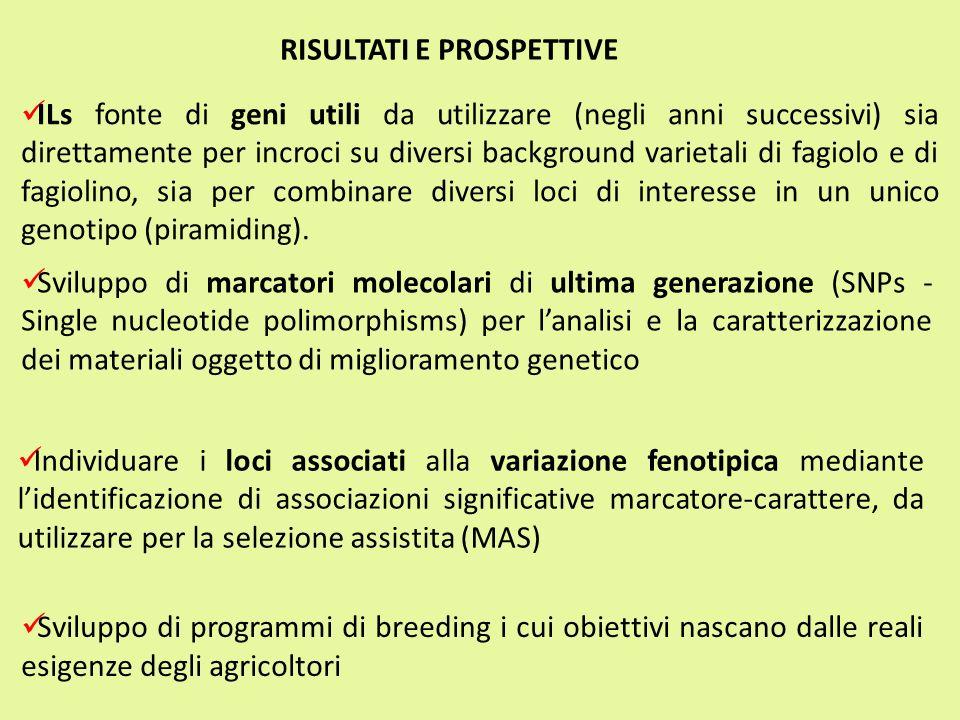 ILs fonte di geni utili da utilizzare (negli anni successivi) sia direttamente per incroci su diversi background varietali di fagiolo e di fagiolino,