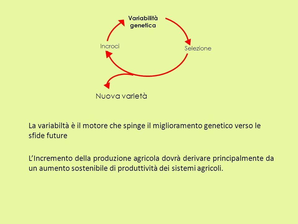 Nuova varietà Variabilità genetica Selezione Incroci La variabiltà è il motore che spinge il miglioramento genetico verso le sfide future LIncremento