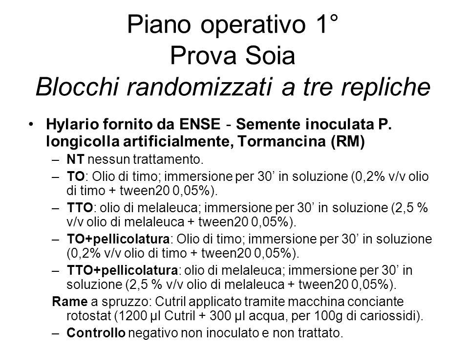 Hylario fornito da ENSE - Semente inoculata P. longicolla artificialmente, Tormancina (RM) –NT nessun trattamento. –TO: Olio di timo; immersione per 3