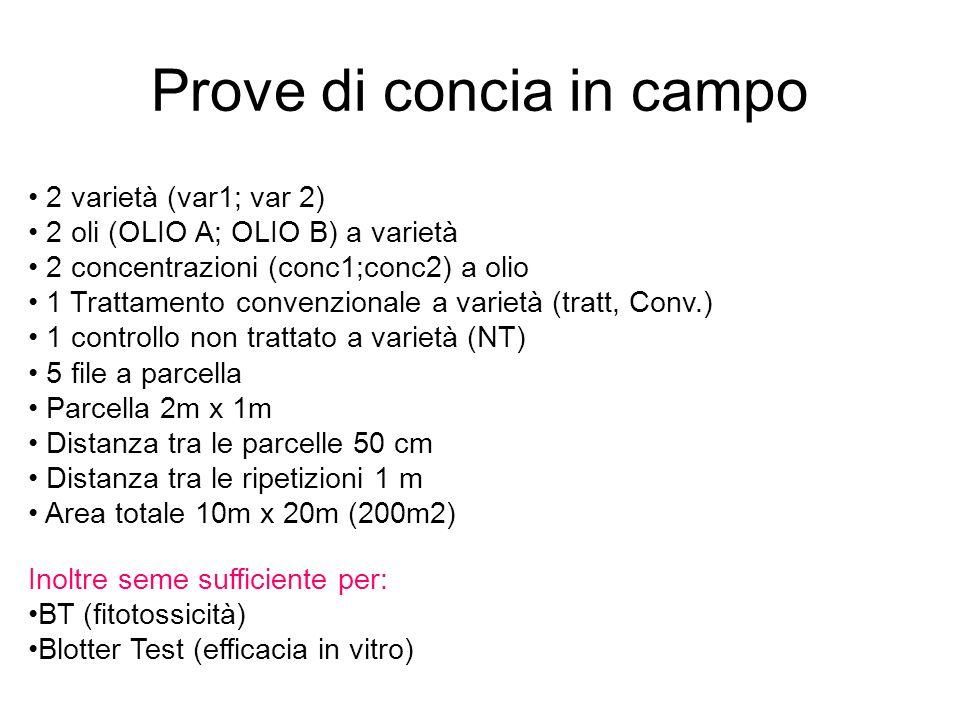Prove di concia in campo 2 varietà (var1; var 2) 2 oli (OLIO A; OLIO B) a varietà 2 concentrazioni (conc1;conc2) a olio 1 Trattamento convenzionale a