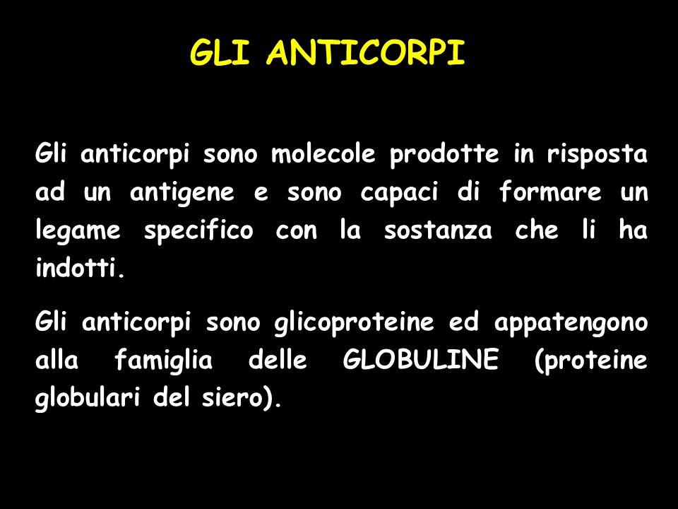 GLI ANTICORPI Gli anticorpi sono molecole prodotte in risposta ad un antigene e sono capaci di formare un legame specifico con la sostanza che li ha i