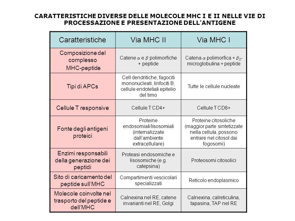 CaratteristicheVia MHC IIVia MHC I Composizione del complesso MHC-peptide Catene e polimorfiche + peptide Catena polimorfica + 2 - microglobulina + pe