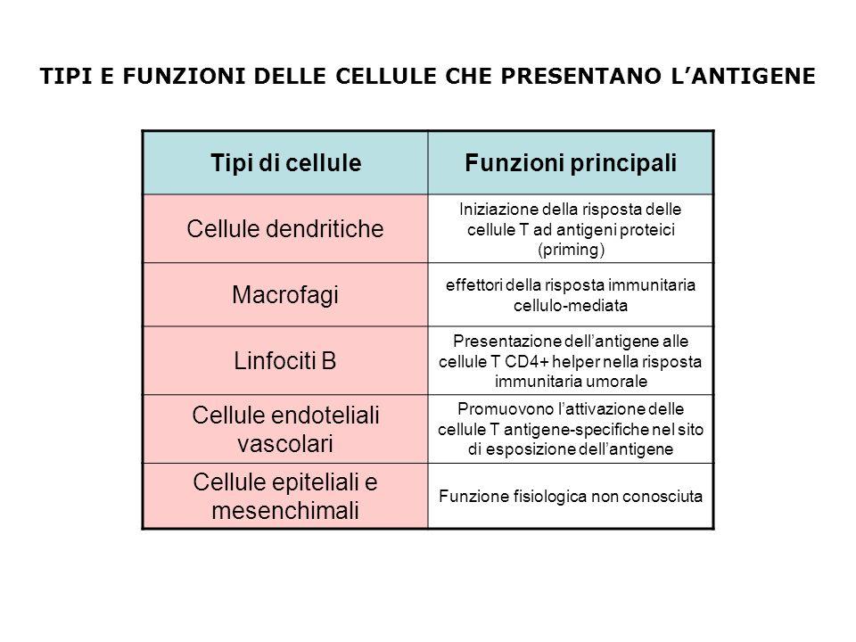 Tipi di celluleFunzioni principali Cellule dendritiche Iniziazione della risposta delle cellule T ad antigeni proteici (priming) Macrofagi effettori d