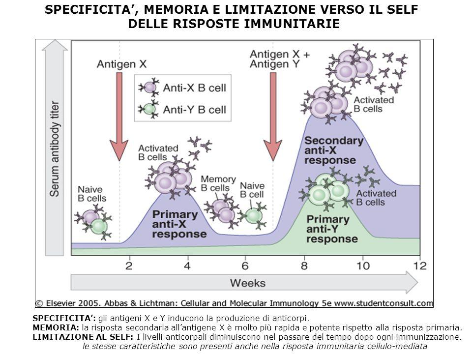 SPECIFICITA, MEMORIA E LIMITAZIONE VERSO IL SELF DELLE RISPOSTE IMMUNITARIE SPECIFICITA: gli antigeni X e Y inducono la produzione di anticorpi. MEMOR