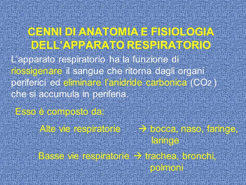 CENNI DI ANATOMIA E FISIOLOGIA DELLAPPARATO RESPIRATORIO Lapparato respiratorio ha la funzione di riossigenare il sangue che ritorna dagli organi peri