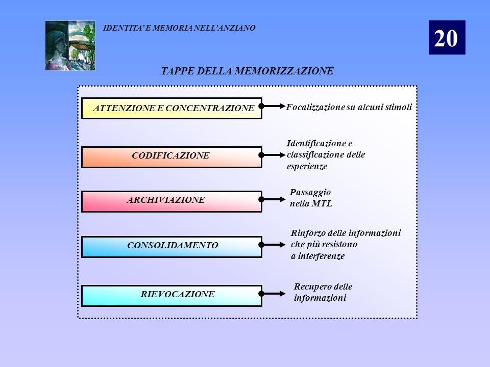 TAPPE DELLA MEMORIZZAZIONE ATTENZIONE E CONCENTRAZIONE Focalizzazione su alcuni stimoli CODIFICAZIONE Identificazione e classificazione delle esperien