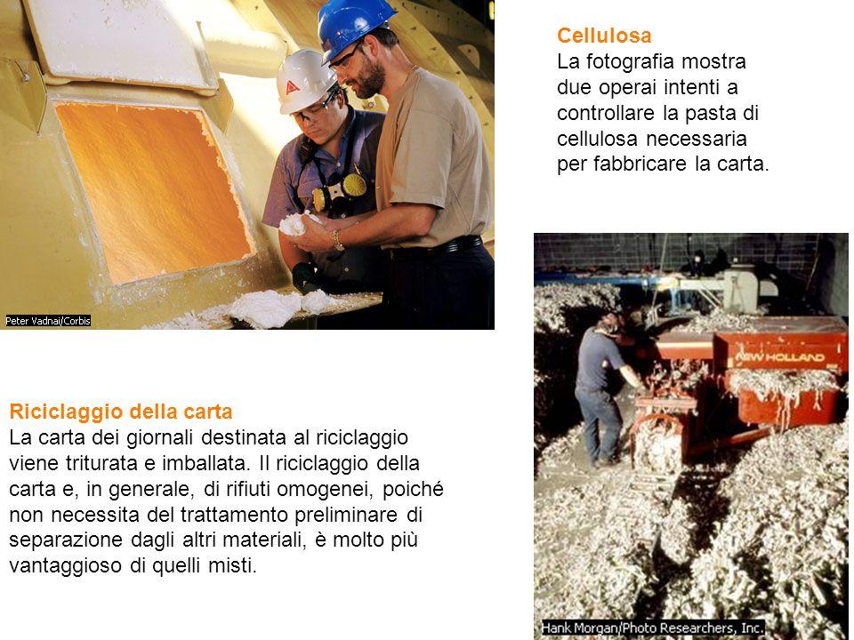 Cellulosa La fotografia mostra due operai intenti a controllare la pasta di cellulosa necessaria per fabbricare la carta. Riciclaggio della carta La c