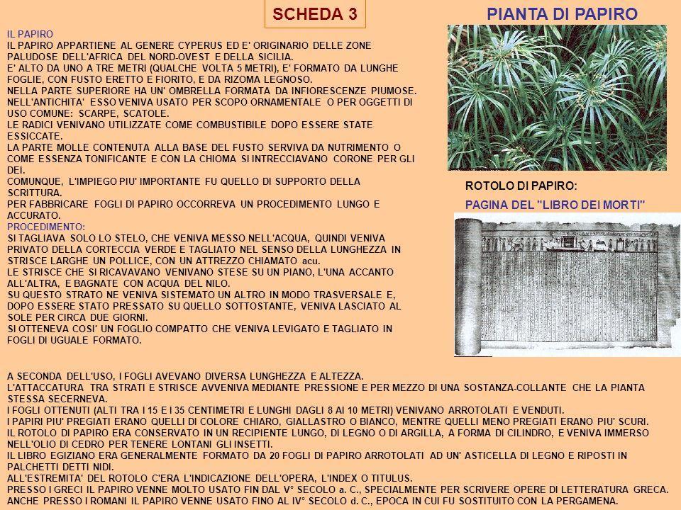 SCHEDA 3 IL PAPIRO IL PAPIRO APPARTIENE AL GENERE CYPERUS ED E' ORIGINARIO DELLE ZONE PALUDOSE DELL'AFRICA DEL NORD-OVEST E DELLA SICILIA. E' ALTO DA