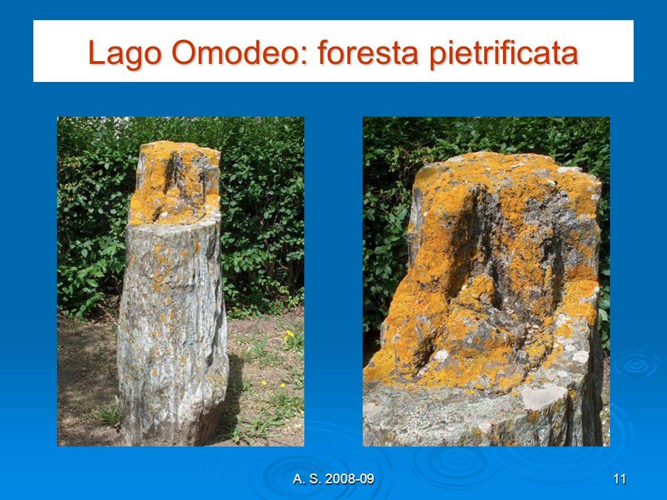 A. S. 2008-0911 Lago Omodeo: foresta pietrificata