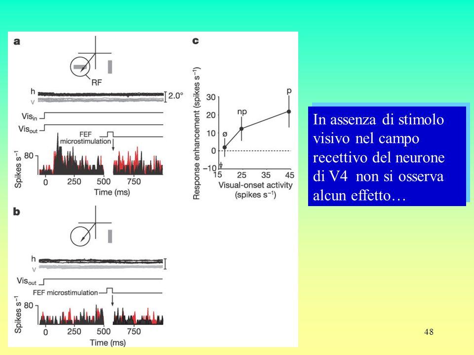 48 In assenza di stimolo visivo nel campo recettivo del neurone di V4 non si osserva alcun effetto…