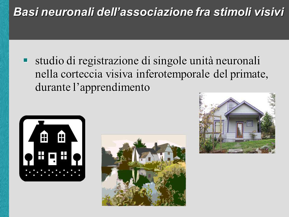 Basi neuronali dellassociazione fra stimoli visivi studio di registrazione di singole unità neuronali nella corteccia visiva inferotemporale del primate, durante lapprendimento studio di registrazione di singole unità neuronali nella corteccia visiva inferotemporale del primate, durante lapprendimento