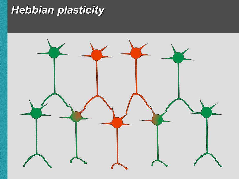 Hebbian plasticity