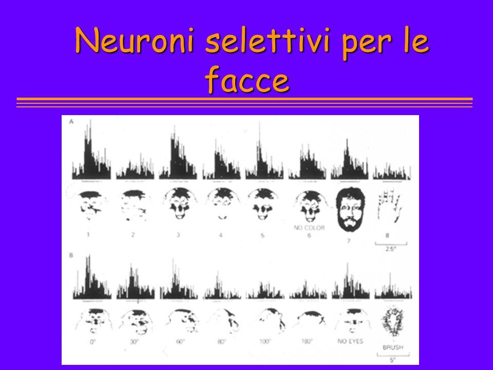 Neuroni selettivi per le facce Neuroni selettivi per le facce