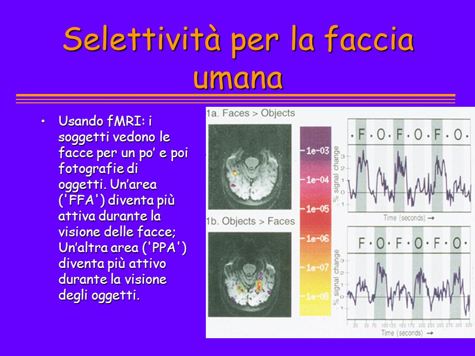 Selettività per la faccia umana Usando fMRI: i soggetti vedono le facce per un po e poi fotografie di oggetti. Unarea ('FFA') diventa più attiva duran