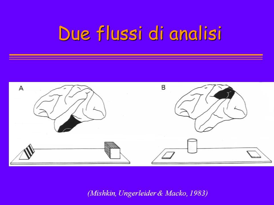(Mishkin, Ungerleider & Macko, 1983) Due flussi di analisi Due flussi di analisi