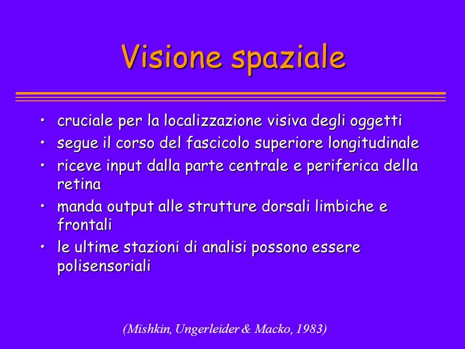 (Mishkin, Ungerleider & Macko, 1983) Visione spaziale cruciale per la localizzazione visiva degli oggetticruciale per la localizzazione visiva degli o