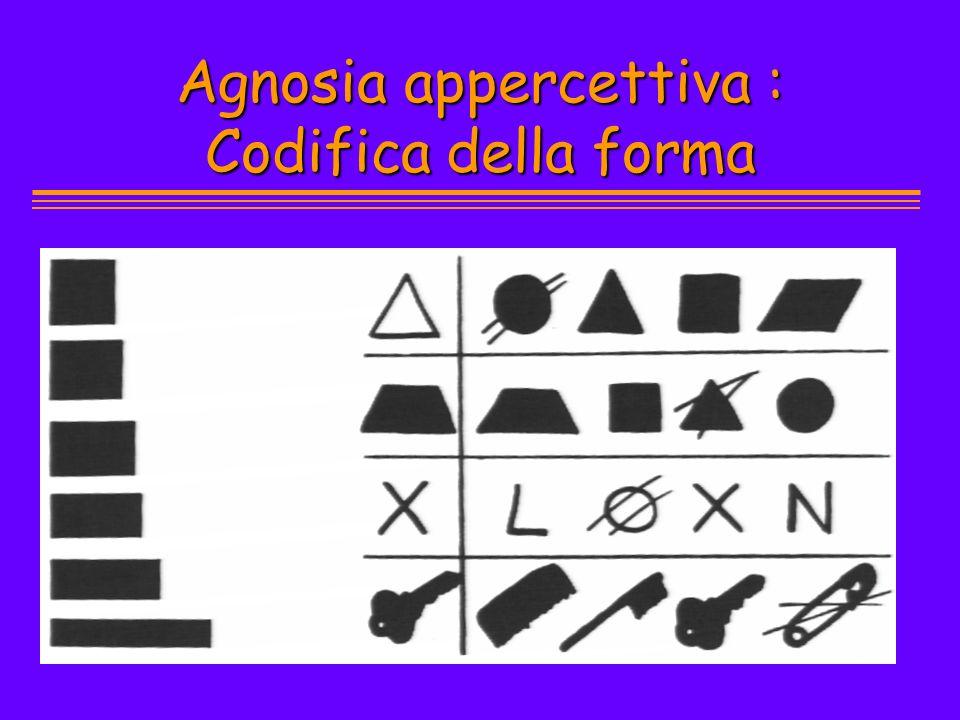 Agnosia appercettiva : Codifica della forma