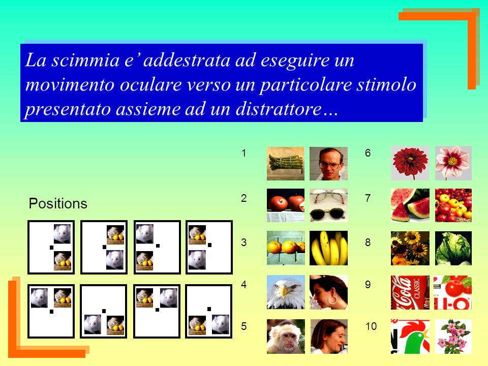 38 1 2 3 4 5 6 7 8 9 10 La scimmia e addestrata ad eseguire un movimento oculare verso un particolare stimolo presentato assieme ad un distrattore… Po