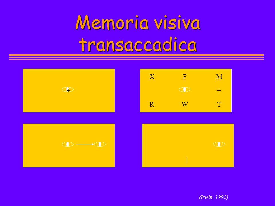 Memoria visiva transaccadica (Irwin, 1992) + X R F W M T | +