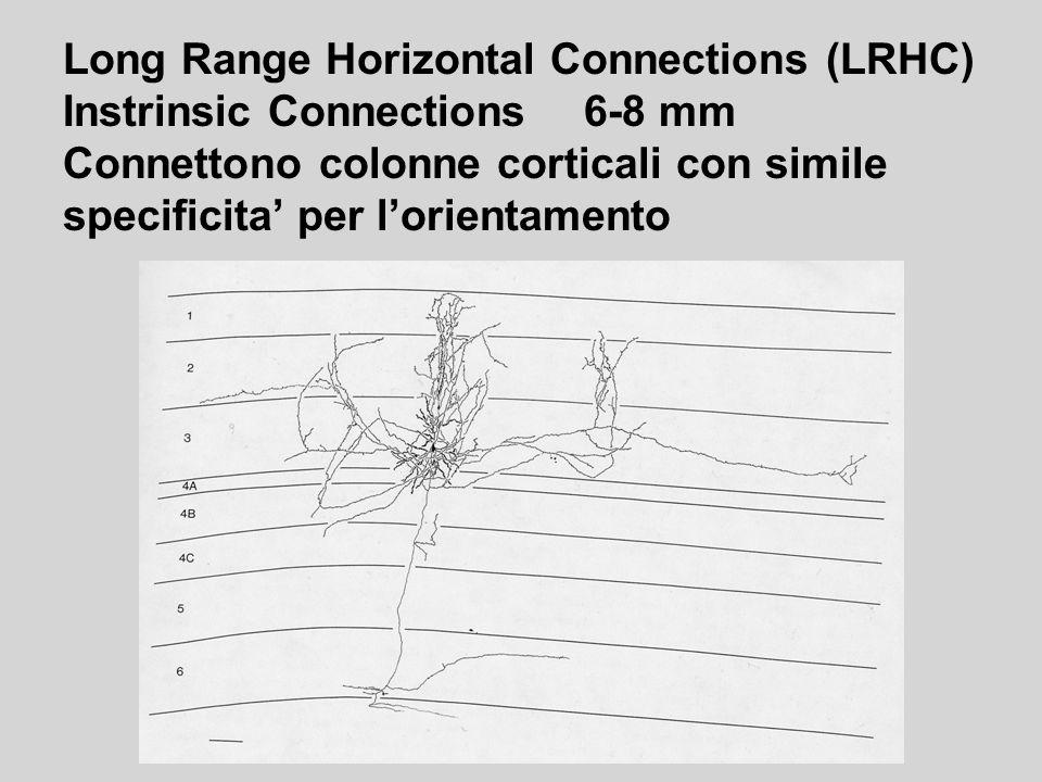 Long Range Horizontal Connections (LRHC) Instrinsic Connections6-8 mm Connettono colonne corticali con simile specificita per lorientamento