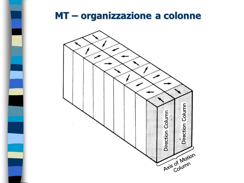 MT – organizzazione a colonne