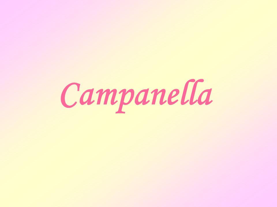 Luniversale animazione delle cose Campanella accetta gli studi fisici di Telesio che ponevano caldo e freddo come principi della natura.