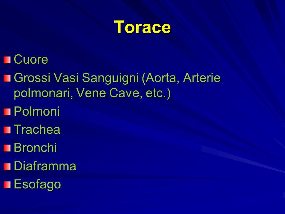 Torace Cuore Grossi Vasi Sanguigni (Aorta, Arterie polmonari, Vene Cave, etc.) PolmoniTracheaBronchiDiaframmaEsofago