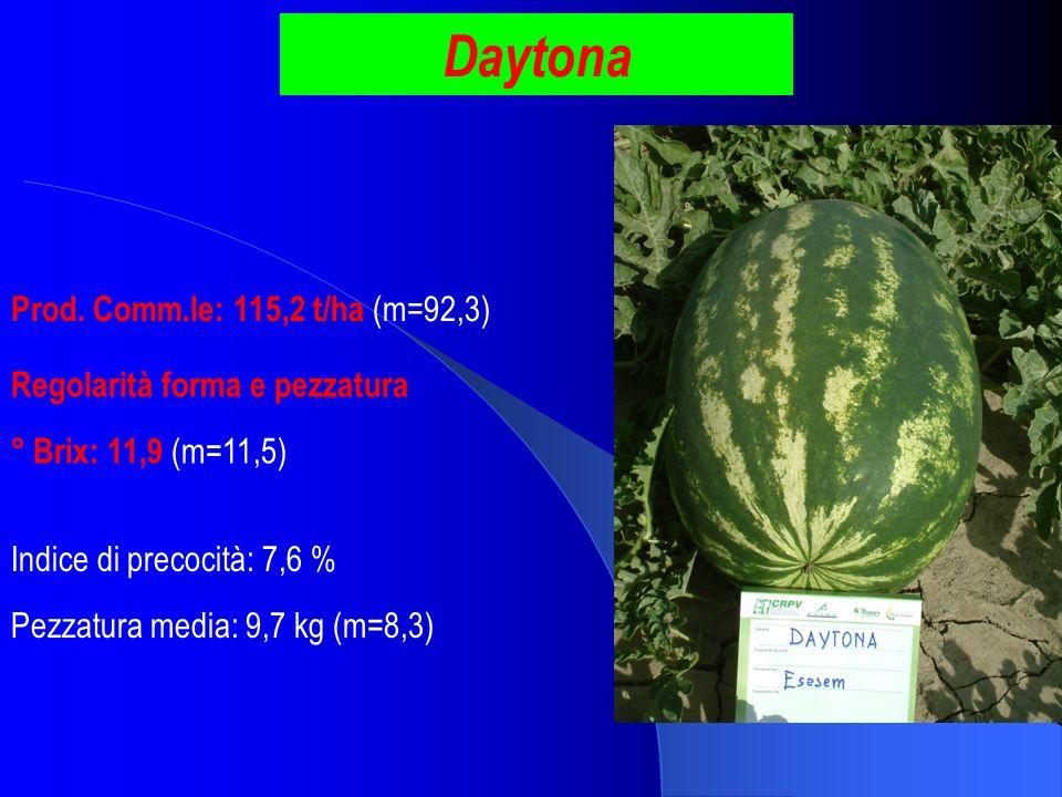 Daytona Prod. Comm.le: 115,2 t/ha (m=92,3) ° Brix: 11,9 (m=11,5) Pezzatura media: 9,7 kg (m=8,3) Indice di precocità: 7,6 % Regolarità forma e pezzatu