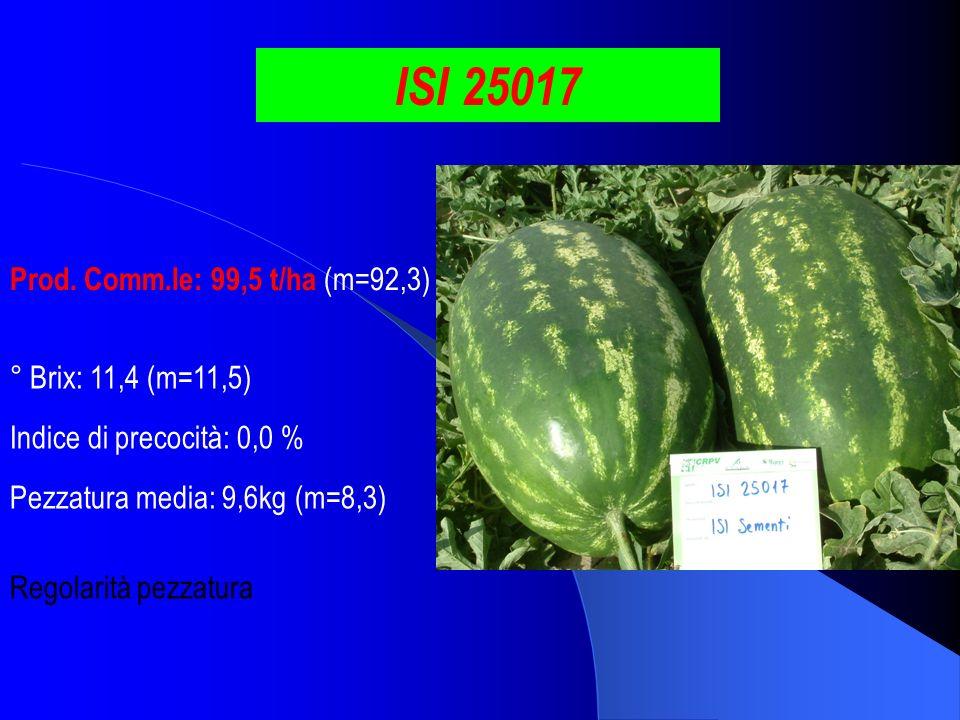 ISI 25017 Prod. Comm.le: 99,5 t/ha (m=92,3) ° Brix: 11,4 (m=11,5) Pezzatura media: 9,6kg (m=8,3) Indice di precocità: 0,0 % Regolarità pezzatura