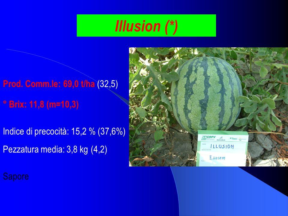 Illusion (*) Prod. Comm.le: 69,0 t/ha (32,5) ° Brix: 11,8 (m=10,3) Pezzatura media: 3,8 kg (4,2) Indice di precocità: 15,2 % (37,6%) Sapore