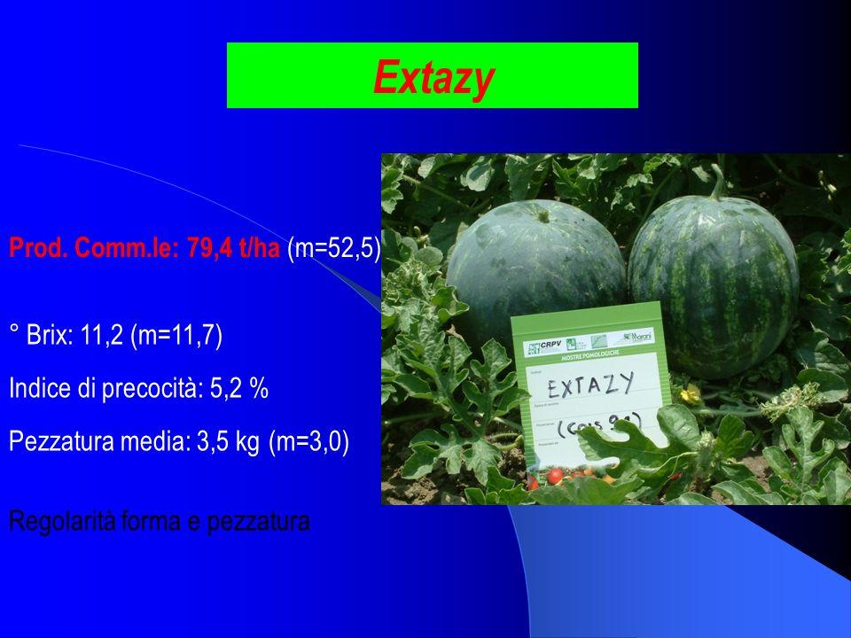 Extazy Prod. Comm.le: 79,4 t/ha (m=52,5) ° Brix: 11,2 (m=11,7) Pezzatura media: 3,5 kg (m=3,0) Indice di precocità: 5,2 % Regolarità forma e pezzatura