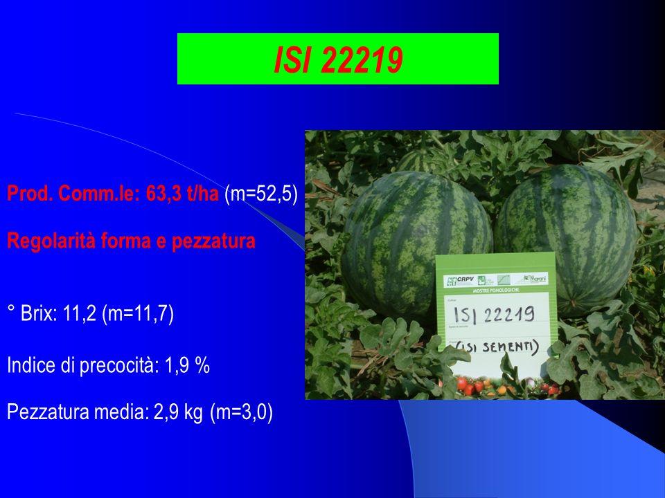 ISI 22219 Prod. Comm.le: 63,3 t/ha (m=52,5) ° Brix: 11,2 (m=11,7) Pezzatura media: 2,9 kg (m=3,0) Indice di precocità: 1,9 % Regolarità forma e pezzat