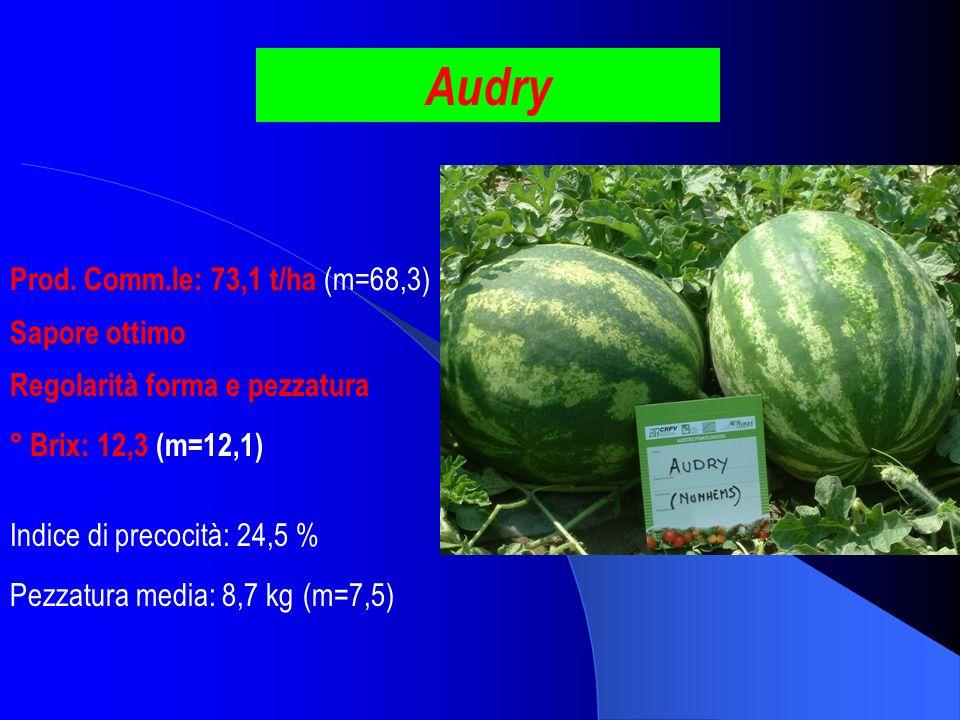 Audry Prod. Comm.le: 73,1 t/ha (m=68,3) ° Brix: 12,3 (m=12,1) Pezzatura media: 8,7 kg (m=7,5) Indice di precocità: 24,5 % Regolarità forma e pezzatura