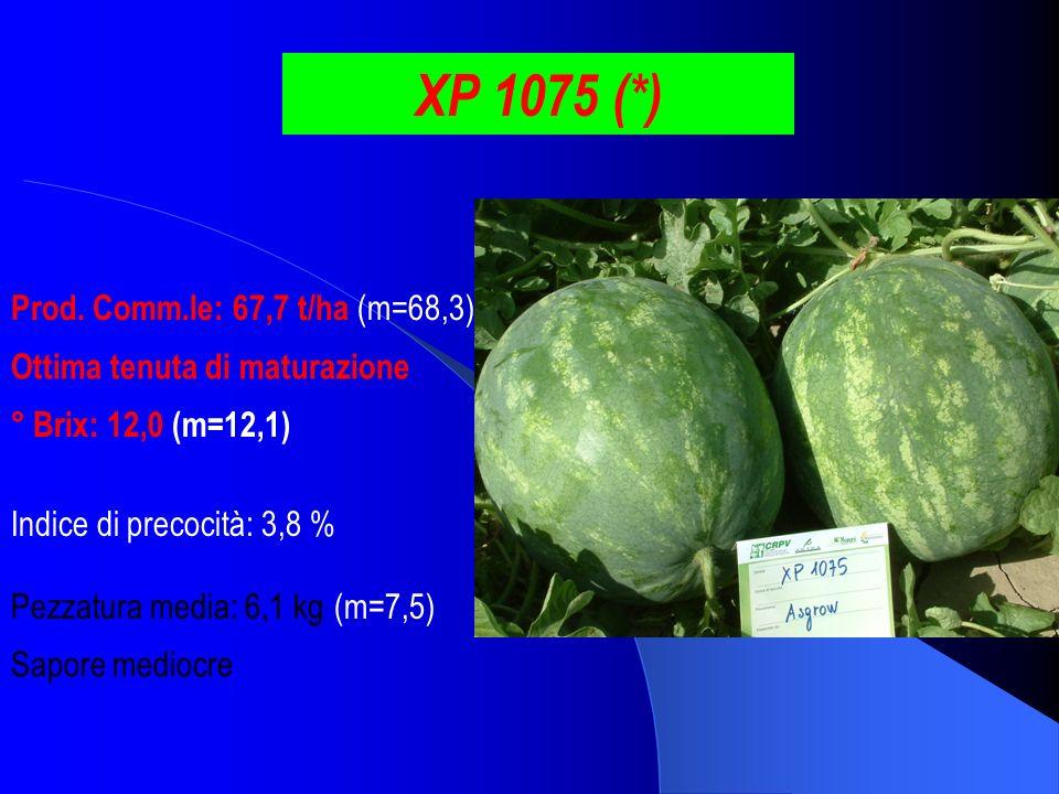 XP 1075 (*) Prod. Comm.le: 67,7 t/ha (m=68,3) ° Brix: 12,0 (m=12,1) Pezzatura media: 6,1 kg (m=7,5) Indice di precocità: 3,8 % Ottima tenuta di matura