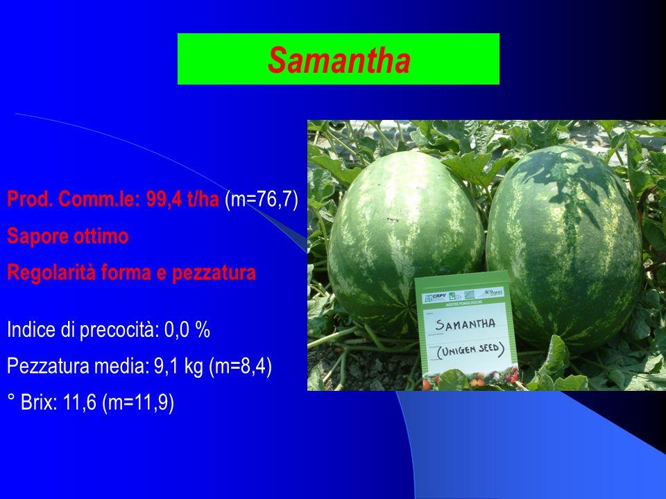 Samantha Prod. Comm.le: 99,4 t/ha (m=76,7) Sapore ottimo ° Brix: 11,6 (m=11,9) Pezzatura media: 9,1 kg (m=8,4) Indice di precocità: 0,0 % Regolarità f