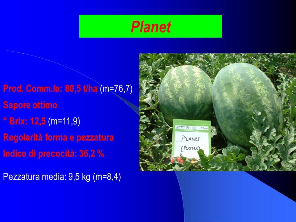 Planet Prod. Comm.le: 80,5 t/ha (m=76,7) Sapore ottimo ° Brix: 12,5 (m=11,9) Pezzatura media: 9,5 kg (m=8,4) Indice di precocità: 36,2 % Regolarità fo
