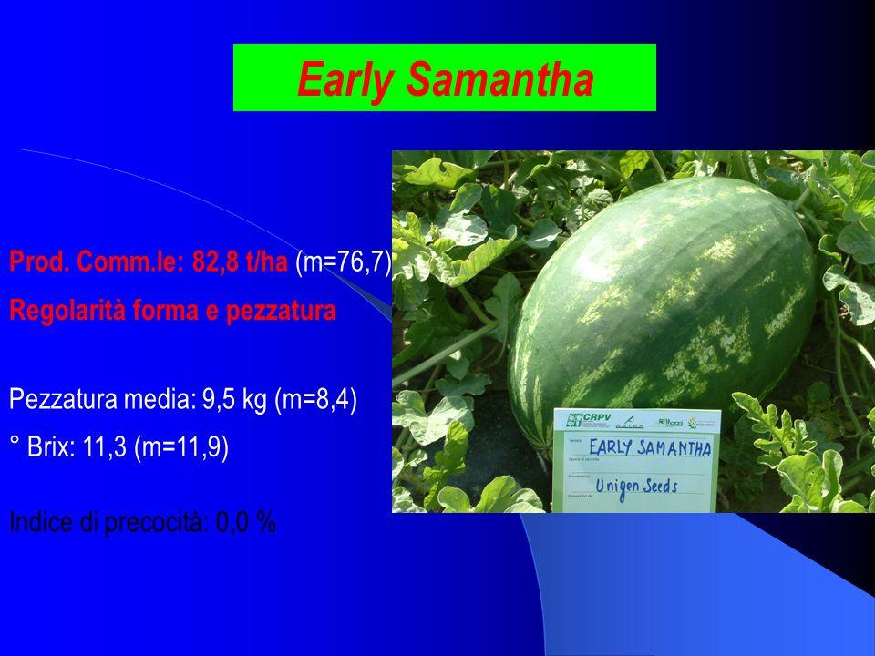 Early Samantha Prod. Comm.le: 82,8 t/ha (m=76,7) ° Brix: 11,3 (m=11,9) Pezzatura media: 9,5 kg (m=8,4) Indice di precocità: 0,0 % Regolarità forma e p