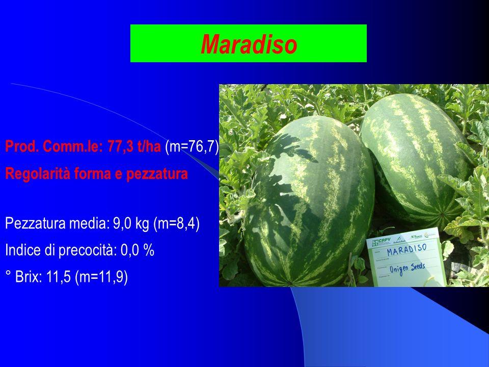 Maradiso Prod. Comm.le: 77,3 t/ha (m=76,7) ° Brix: 11,5 (m=11,9) Pezzatura media: 9,0 kg (m=8,4) Indice di precocità: 0,0 % Regolarità forma e pezzatu