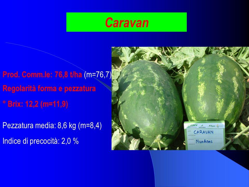 Caravan Prod. Comm.le: 76,8 t/ha (m=76,7) ° Brix: 12,2 (m=11,9) Pezzatura media: 8,6 kg (m=8,4) Indice di precocità: 2,0 % Regolarità forma e pezzatur