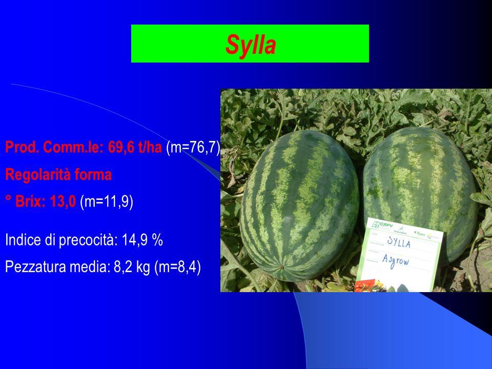Sylla Prod. Comm.le: 69,6 t/ha (m=76,7) ° Brix: 13,0 (m=11,9) Pezzatura media: 8,2 kg (m=8,4) Indice di precocità: 14,9 % Regolarità forma