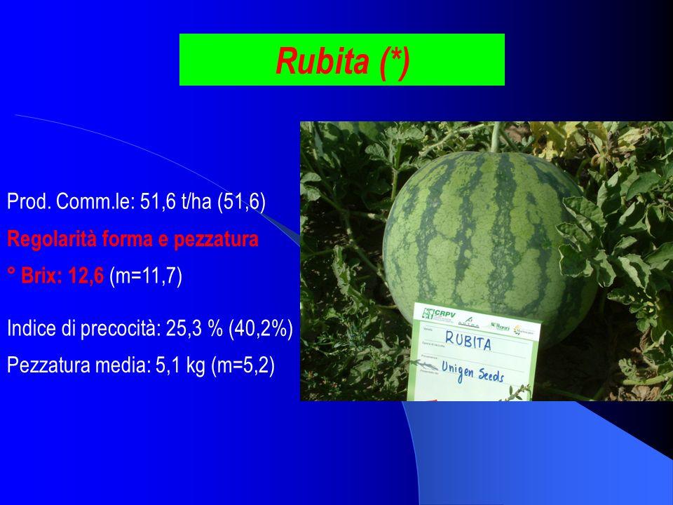Rubita (*) Prod. Comm.le: 51,6 t/ha (51,6) ° Brix: 12,6 (m=11,7) Pezzatura media: 5,1 kg (m=5,2) Indice di precocità: 25,3 % (40,2%) Regolarità forma