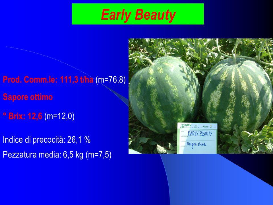 Early Beauty Prod. Comm.le: 111,3 t/ha (m=76,8) ° Brix: 12,6 (m=12,0) Pezzatura media: 6,5 kg (m=7,5) Indice di precocità: 26,1 % Sapore ottimo