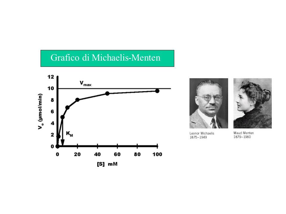 Aspetti importanti della cinetica di Michaelis-Menten Lequazione di Michaelis-Menten è la seguente: V max è la velocità limitante per concentrazioni di S tendenti allinfinito K m è la concentrazione di S che fa assumere alla reazione metà della velocità massima ed è espressa in Moli o millimoli o micromoli.