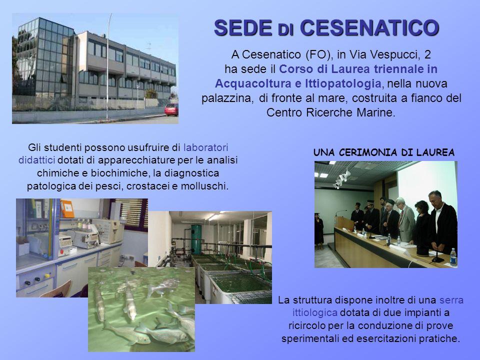 SEDE DI CESENATICO A Cesenatico (FO), in Via Vespucci, 2 ha sede il Corso di Laurea triennale in Acquacoltura e Ittiopatologia, nella nuova palazzina, di fronte al mare, costruita a fianco del Centro Ricerche Marine.