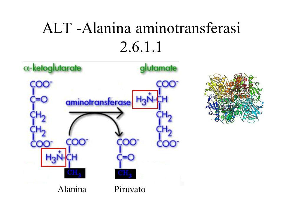 ALT -Alanina aminotransferasi 2.6.1.1 AlaninaPiruvato