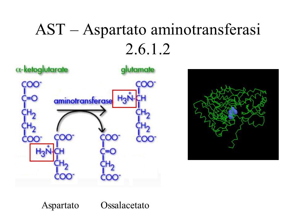 AST – Aspartato aminotransferasi 2.6.1.2 Aspartato Ossalacetato