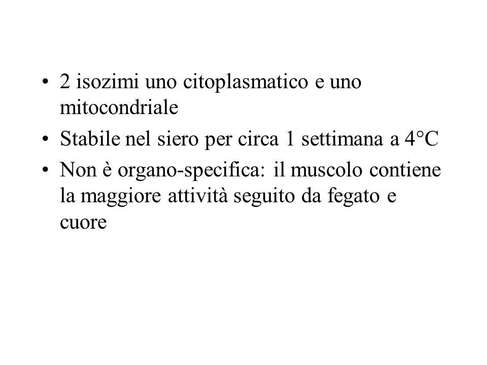 2 isozimi uno citoplasmatico e uno mitocondriale Stabile nel siero per circa 1 settimana a 4°C Non è organo-specifica: il muscolo contiene la maggiore